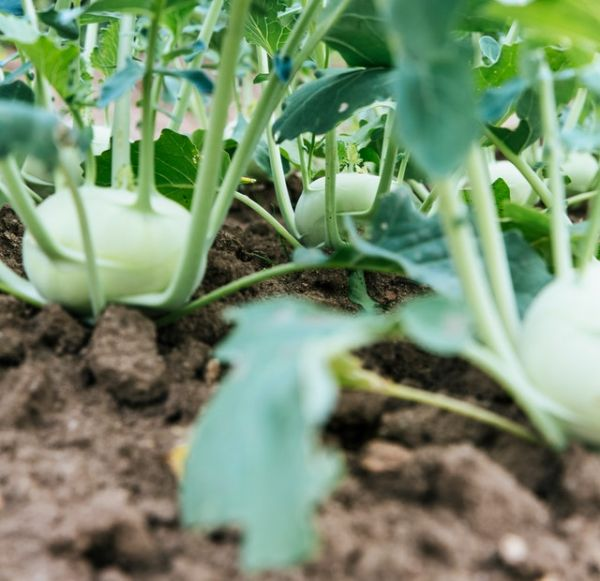 Diocese of Delaware Supports Producers of Locally Grown Food